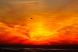 Seagull on red  _MG_9341.jpg