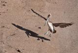 Beach landing _MG_1042.jpg