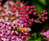 Flowers with a sting _MG_7610.jpg