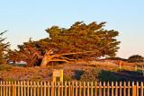 Sunset tree _MG_4346.jpg