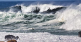 Big waves little bird  _MG_2112.jpg