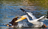 The food chain _MG_7989.jpg