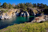 A bay on Pt Lobos in California _MG_1043_v1.jpg