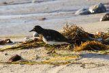 ex bird on beach_MG_9433.jpg