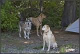 Rail-Dogs