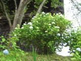 June in Amabiki