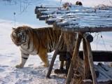 Large Animal Pics
