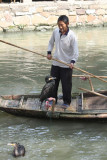 Cormorants went on strike - refused to fish and pissed off the fisherman