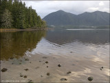 VANCOUVER ISLAND 2008 - SCENES