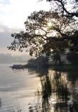 Lake Tana Morning II