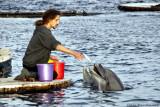 Dolphin Feeding