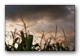 2140 Corn-Sky.jpg