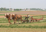 Amish_8