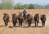 Amish_13