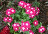 Tamron 17-50 Flowers