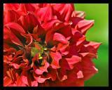 Flower 49