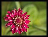 Flower 65