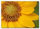 Flower 67
