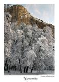 Yosemite Winter