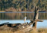 Bird in a quiet place