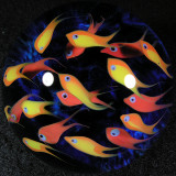 Cool School Size: 2.25 Price: SOLD
