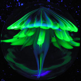 NightLight Jelly  Size: 1.33  Price: SOLD