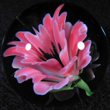 Passionate Bliss Size: 1.55 Price: SOLD