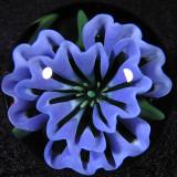 Fleur de Bleu Size: 1.16 Price: SOLD