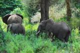 Elephant . Manyara NP