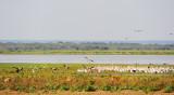 Manyara lake