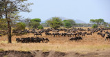 Wildebeests near Grumeti river.Serengeti