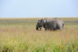 Africa Elephant.Serengeti