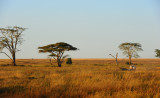 Early morning in Serengeti