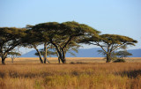 Early morning scenery of Serengeti
