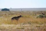 A  Hyena also comes