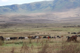Scenery on highland of Ngorongoro