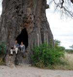 Giant Baobab tree.Tarangire