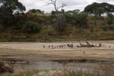 Dry Tarangire river