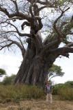 Baobab tree. Tarangire