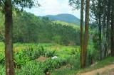 road to Musanze