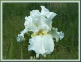 Debonshire Cream X