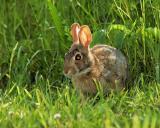 PA Farm-bunny 06112006-005.jpg