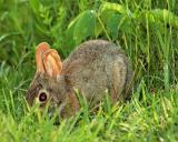 PA Farm-bunny 06112006-006.jpg