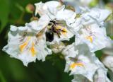PA Farm-bee 06132006-002.jpg