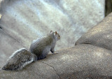 7272_fat_squirrel.JPG