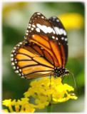 butterflypark-bannerghatta.jpg