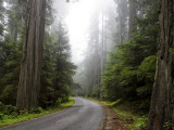 Traveling through the Redwood Empire, California North Coast