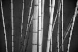 Bamboo Garden - Golden Gate University