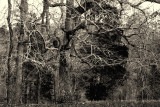Tree, Kerr Lake