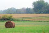 Field on rainy day (D7000)